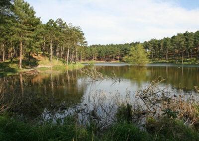 natuur-in-boswachterij-westerschouwen